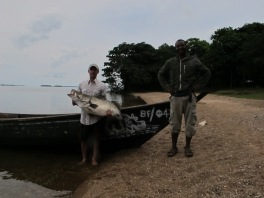Trolling for Nile Perch with Kato